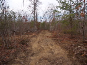 Goose Creek Homestead- Our Top Considerations When Choosing Land for our Homestead